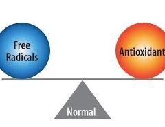 Οξειδωτικό στρες και αντιοξειδωτικά